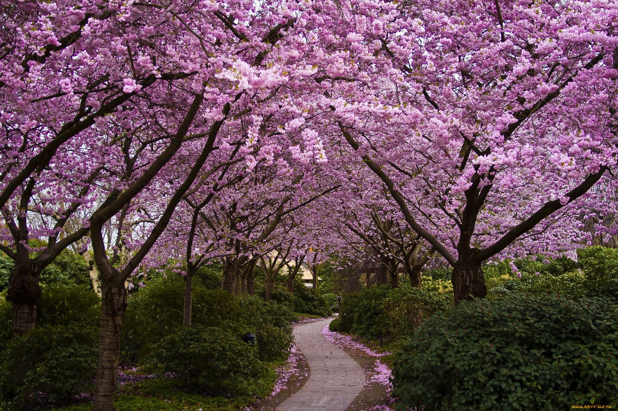 spring wallpaper free - HD1920×1200